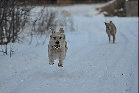 Cornelia flyvende