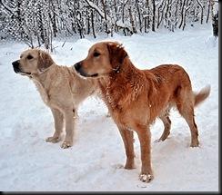 Cornelia og Solan