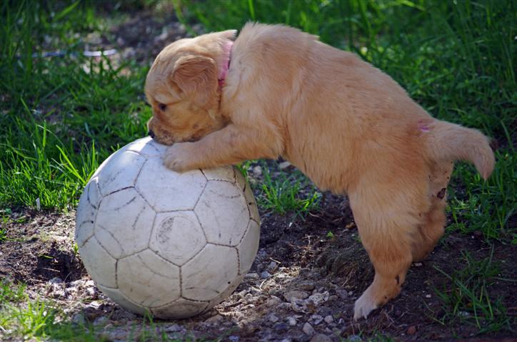 Lille My og ballen