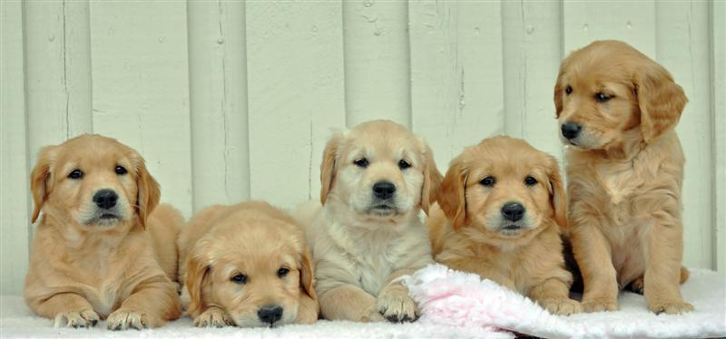 Rose,Shelia,Lexie,Lizzie og Luna