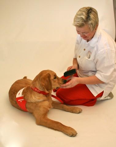 Noe av det pasientene kan gjøre sammen med en omsorgshund, er å gre og stelle omsorgshunden. Dette gir innsikt i daglig pleie, både for hund og mennesker, - samt trening som fremkaller empati og omsorg.