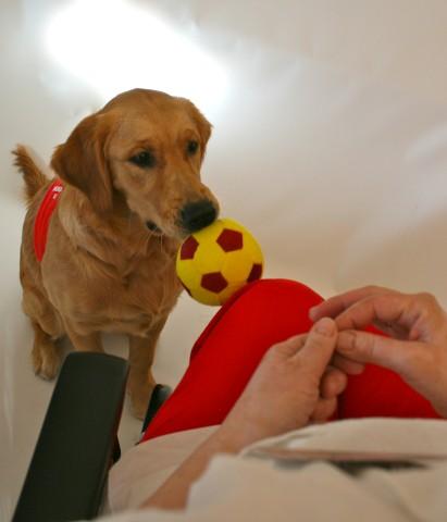 En av ferdighetene som en omsorgshund må fintrene, er apport og nøyaktig levering. Mange pasienter kan delta i både å planlegge, velge gjenstand som skal apporteres og plassere eller kaste gjenstand på apportstedet.