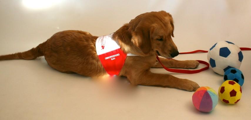 En omsorgshund arbeider med en mengde hjelpemidler og utstyr. Alle tilpasset pasientens behov for trening og rehabilitering. Er det f.eks. fin- eller grovmotorikk som skal trenes? Eller syn og tale? Det er viktig at hunden kan apportere mange typer materialer og fasonger på utstyr.