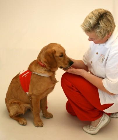 All omsorgshundtrening og arbeid bygger på et rolig og positivt forhold mellom hund og fører. Alle øvelser trenes inn med positiv forsterkning og bekreftende ros.