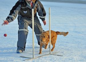 Gurin trener slalom
